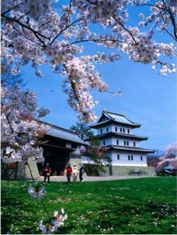 北海道も桜の季節到来です!