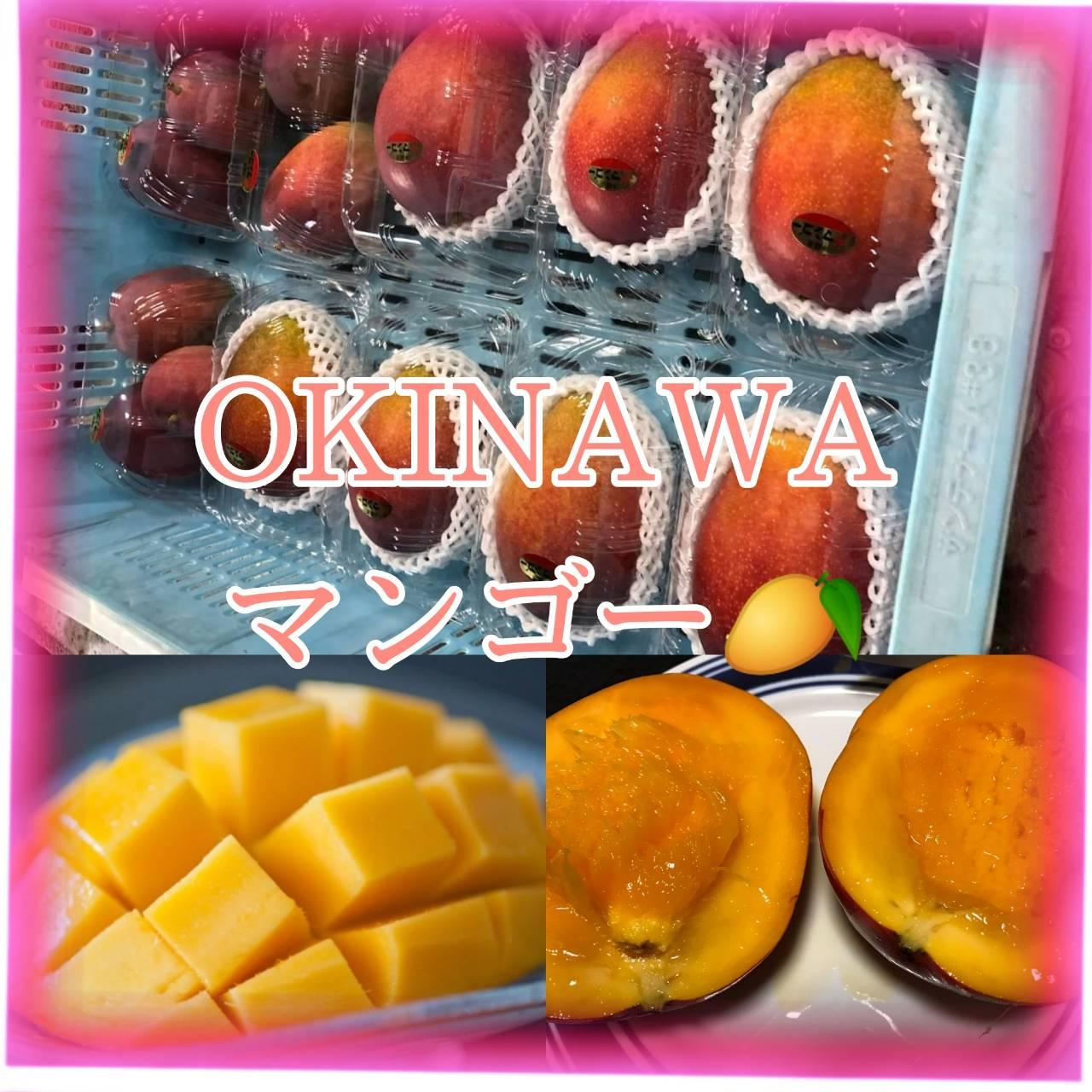 【PRチームおすすめ情報①】果物の女王マンゴー✨